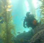Scuba diving excursions in La Jolla.