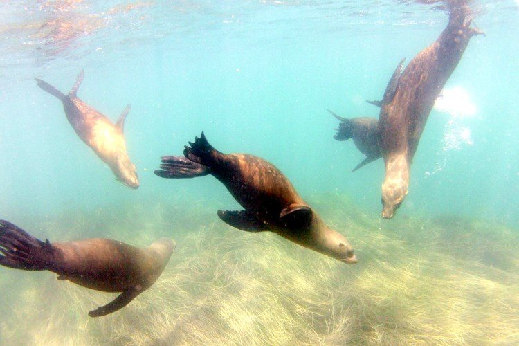 Snorkel near the caves with sea lions.