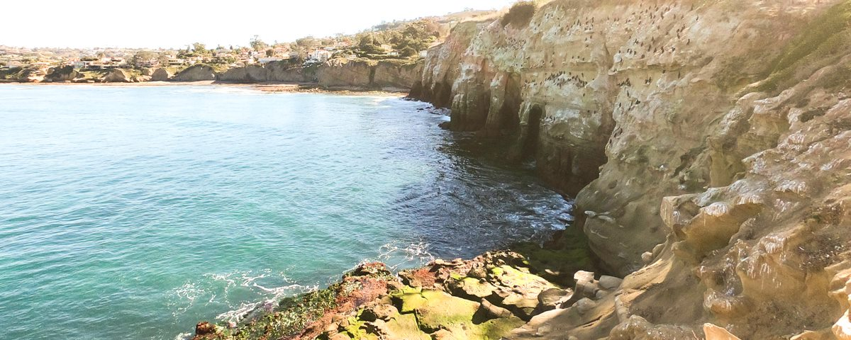 Snorkeling in La Jolla at the cliffs and caves.